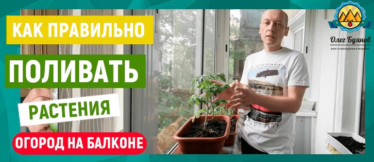 как поливать растения на балконе